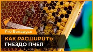 Расширение гнезда пчел: что нужно знать пасечникам