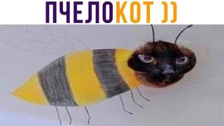 ТЫ ПЧЕЛА, Я ПЧЕЛОКОТ))) Приколы с котами | Мемозг 729