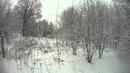 Охота на зайца с эстонской гончей 18