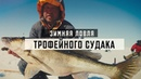 Зимняя ловля трофейного судака на вибы. В толпе! Зимняя подлёдная рыбалка. Рыбинское водохранилище