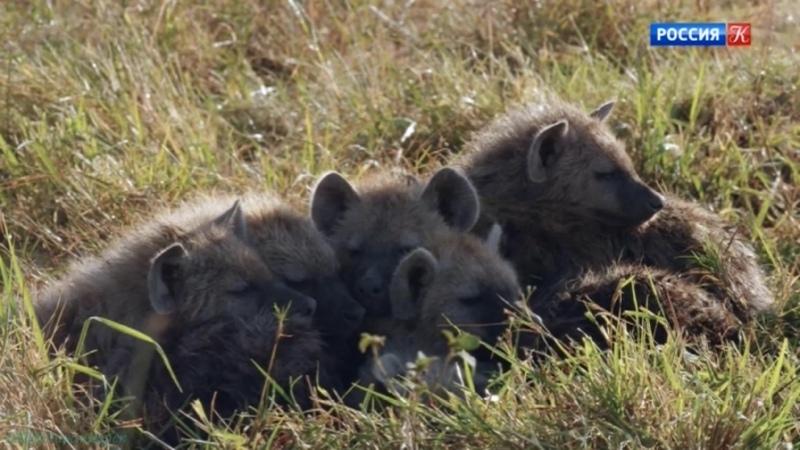 BBC Малыши в дикой природе Первый год на Земле 3 Новые рубежи Познавательный животные 2019
