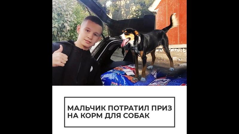Мальчик потратил приз на корм для собак