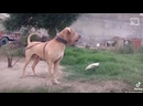 Видео от Hunnybadger Kutta
