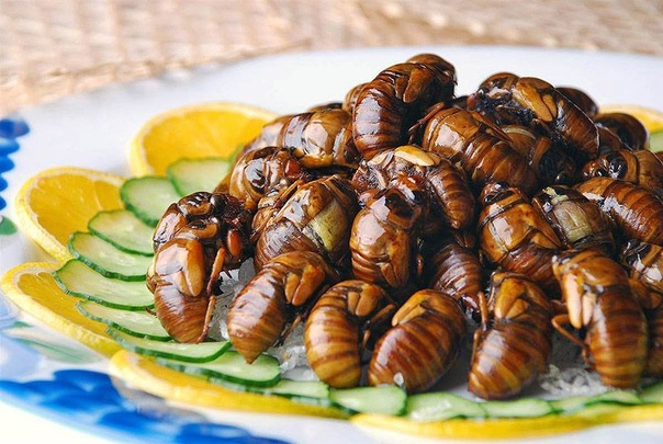 Страны, в которых едят насекомых 😬