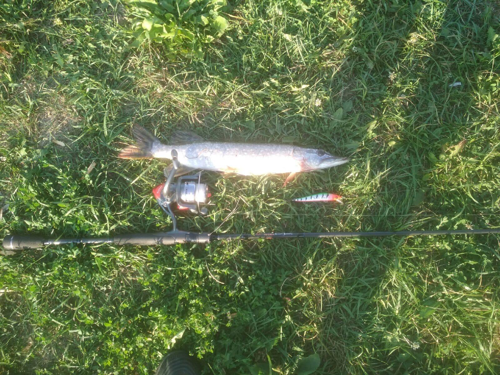 Вот такую красоту поймал юный можгинский рыбак
