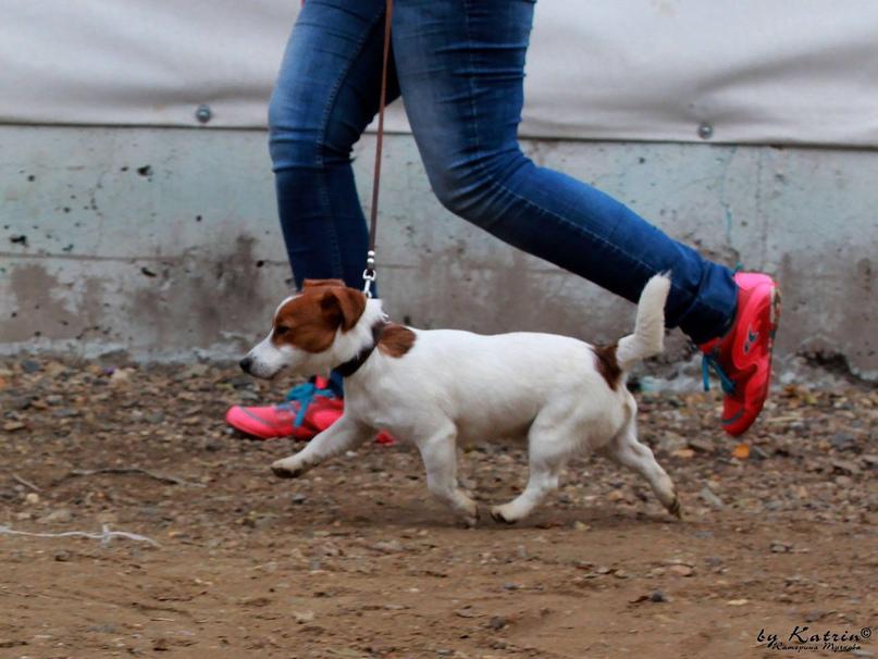Продаются замечательные щенки | Объявления Орска и Новотроицка №27765