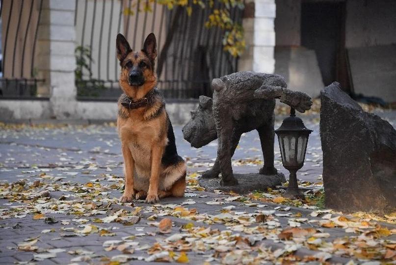 Житель Ярославля добился компенсации от владельца собаки, которая его укусила  Овчарка была без поводка и намордника ... [читать продолжение]