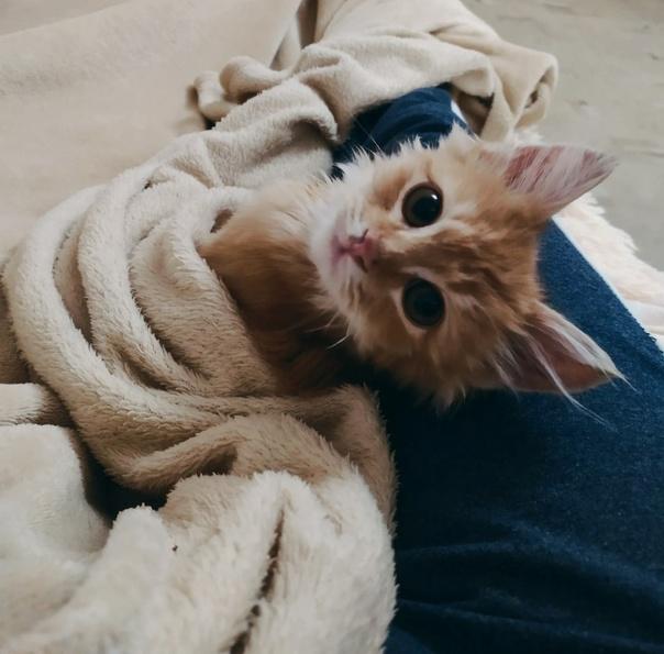Отдам котенка в добрые руки, подобрали на улице, ж...