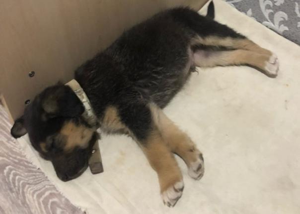 Пропала собака ,кобель возраст примерно 1,6года ,в...