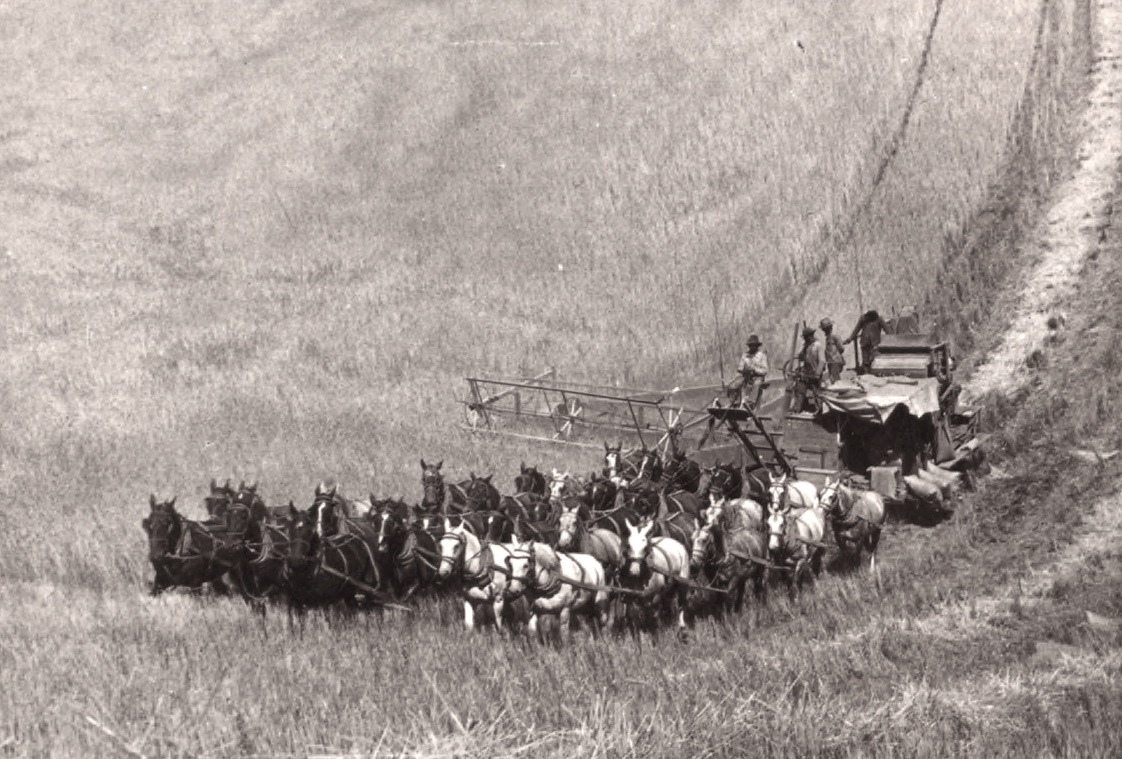 Тридцатитрёхлошадный комбайн в округе Уолла-Уолла, штат Вашингтон, 1902. photo: Robert N. Dennis