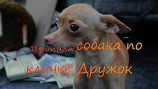 Татьяна Белоус 🐶  Пропала собака по кличке Дружок 🐶