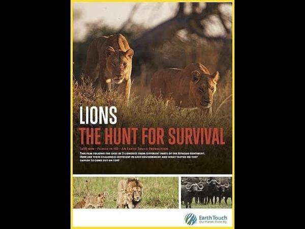 Львицы борьба за выживание Lions The Hunt For Survival 2021
